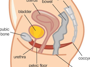 Pelvic floor muscles and how to work them