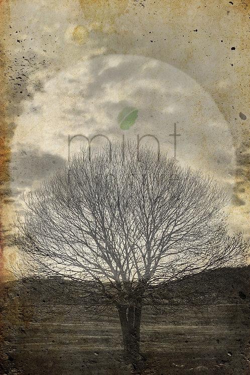 Lone Sepia Tree A-1  24x33