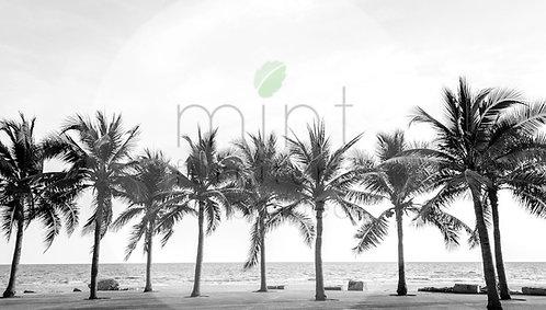 Palm Trees A-3  11x17