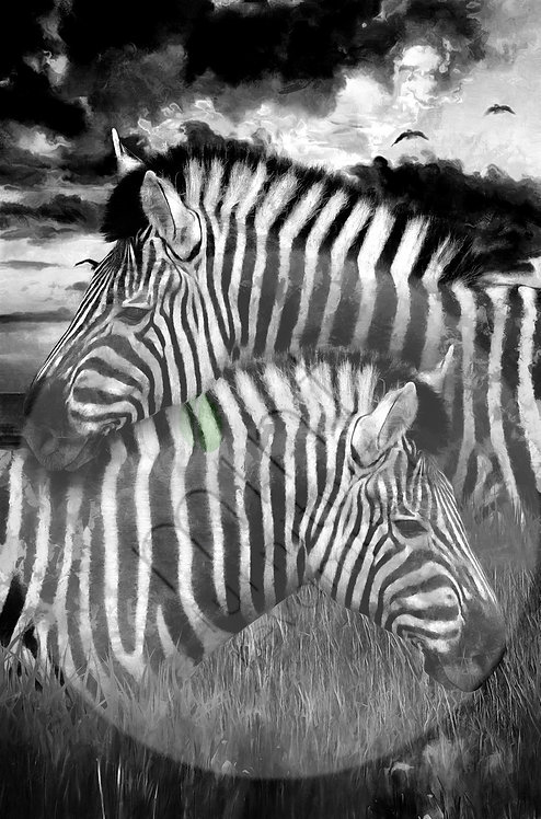 Zebras A-1  22x24