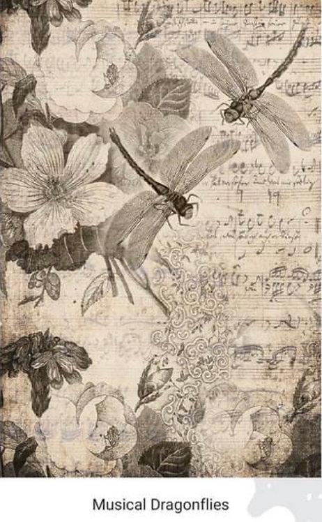 Musical Drangonflies