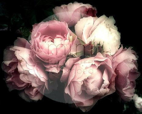 Moody Florals A-1  24x33