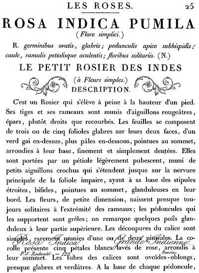 Le Petit Rosier (Large)