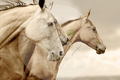 Sepia Horses A-3  11x17