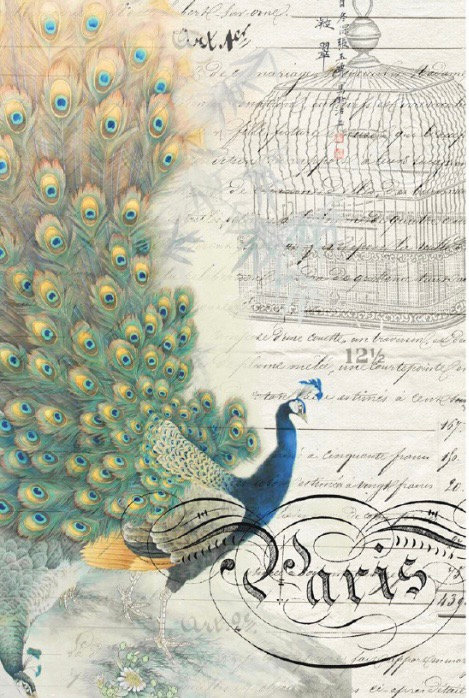 Peacock Ephemera Right