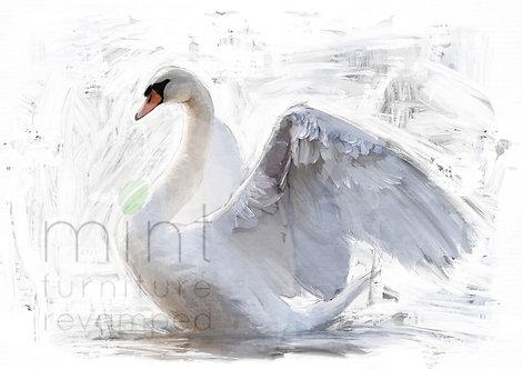 White Swan A-1  24x33