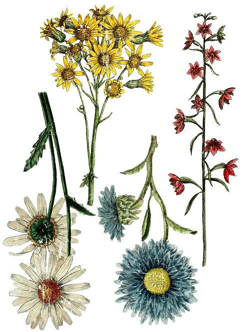 Wildflower Botanicals #19