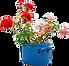 bloemen 150.png
