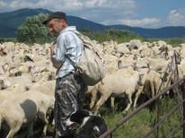 Slovak sheep farm