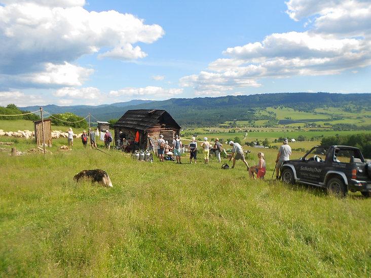 Sheep Farm In The Hills.jpg