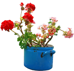 flowers in pots and pans
