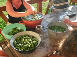 Pickling pickles at sedliacky dvor