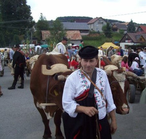 Folklore ox