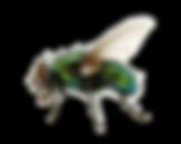 flies%20trans%208_edited.png