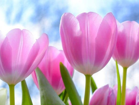 The Essence of The Dancing Spring Flowers