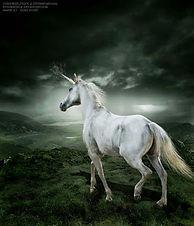 Molly Unicorn.jpg