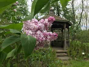 #4 Gazebo Garden