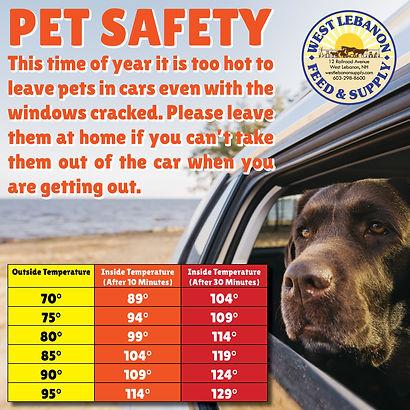 Hot Car Danger For Pets