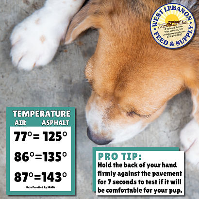 Hot Pavement Danger For Dogs
