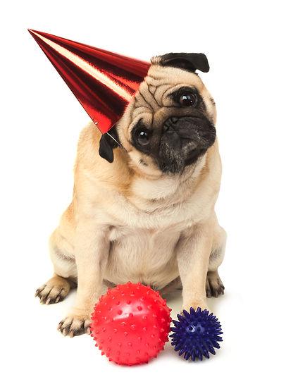Birthday Pug.jpg