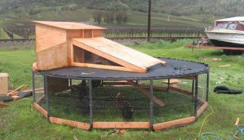 Eco Egging