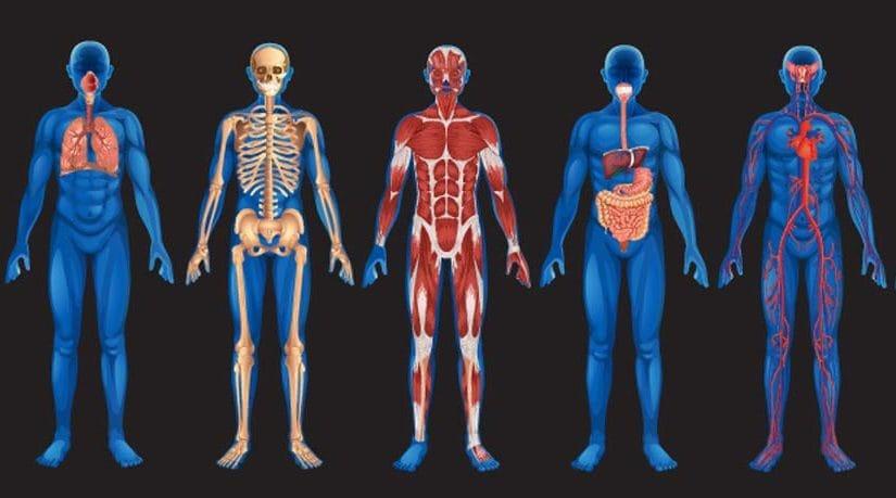 1 hr Manual Osteopathy- general