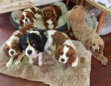 Family Dogs 3.jpg