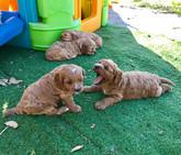 Puppies17.jpg