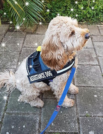 Assistance Dog.jpg
