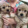Ruby Puppies2.jpg