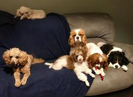 Family Dogs 2.jpg