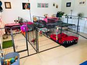 Puppy House 1.jpg