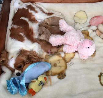 Puppys.jpg
