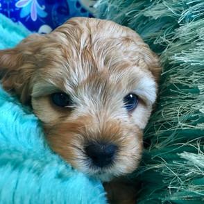 Puppy 11.jpg