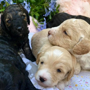 Puppies 10.jpg