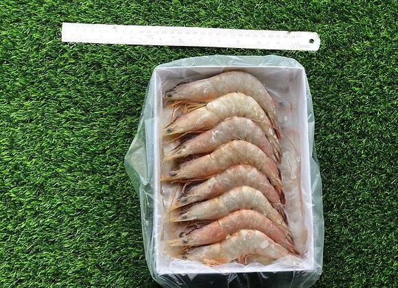 16-20海明虾 / SEA MING PRAWN16-20