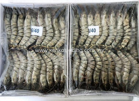 31-40草虾 / BLACK TIGER 31-40
