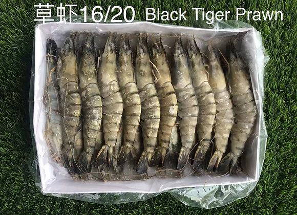 16-20草虾 / BLACK TIGER 16-20