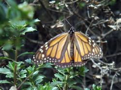 mariposa foto3
