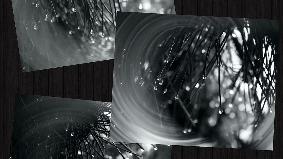 Glimmer Photo Trio