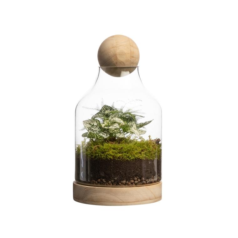Terrarium - Botanic