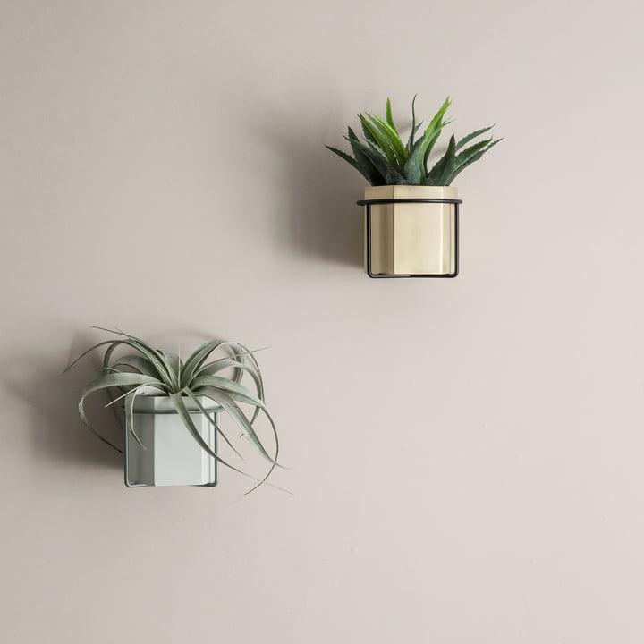 Support mural plante - Connox