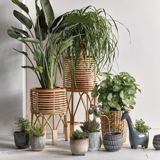 Plantes posées au sol