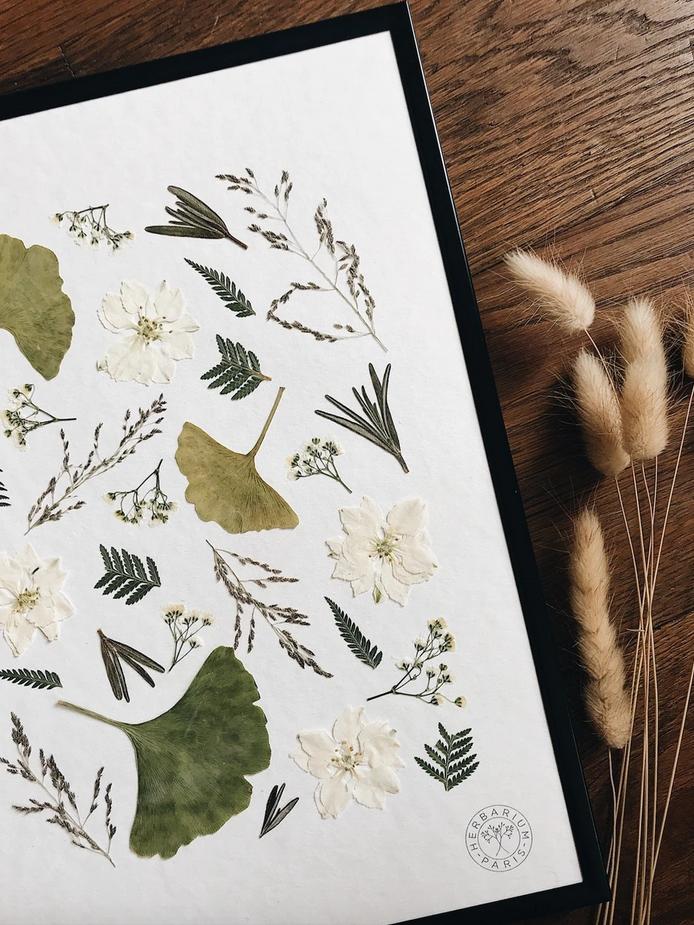 Herbier - Herbarium