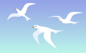 Birds of a Feather-01.jpg