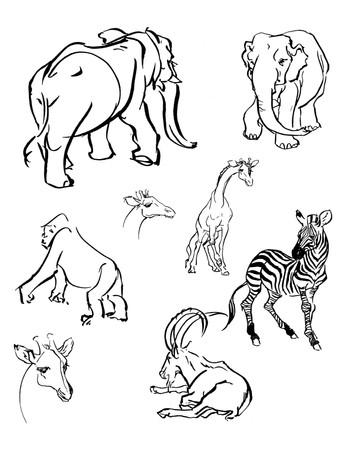 Animals_01.jpg