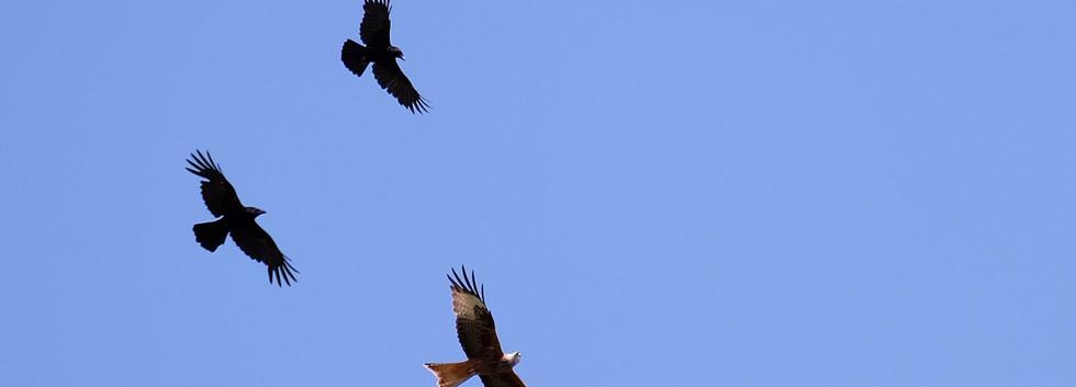 Unwelcomed Wingmen