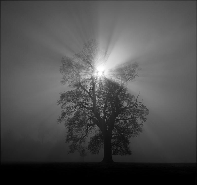 22 Sunburst.jpg