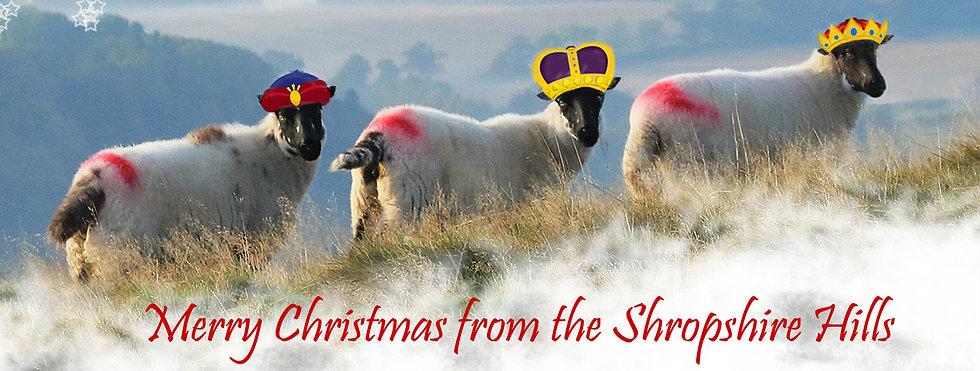 wise sheep.jpg