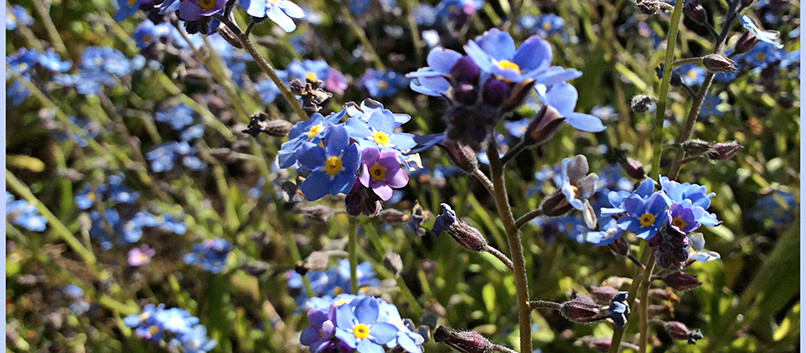 Spring of Blue
